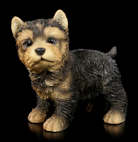 Dog Figurine - Yorkshire Terrier Puppy standing