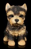 Dog Puppy Figurine - Yorkshire Terrier