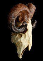 Rams Skull Wall Plaque