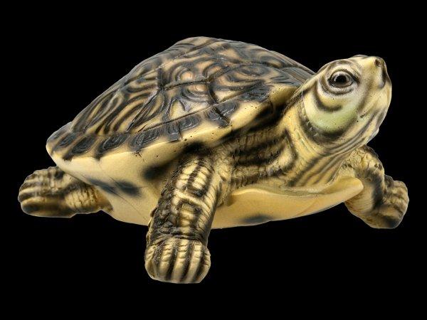 Gelbbauch-Schmuckschildkröte - Figur