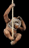 Orangutan Figure hanging on Rope - Cheeky Chap