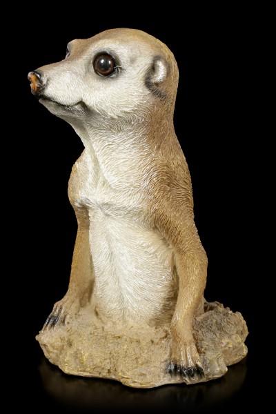 Garden Figurine - Meerkat looks out of Burrow