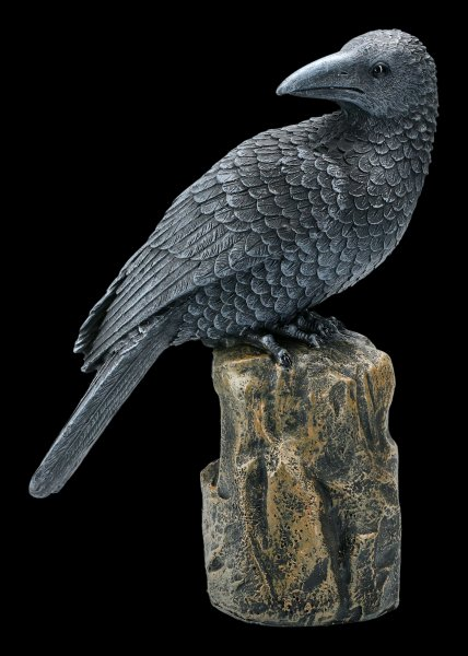 Black Raven sitting on Rock