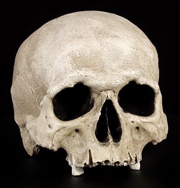 Human Skull Replica - Nahira