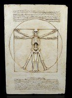 Vitruvian Skeleton Plaque