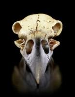 Alchemy Raven Skull - small