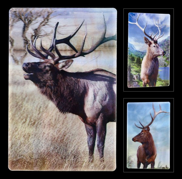 3D Postcard - Stags