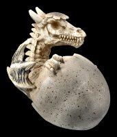 Skelett Drachen Figur schlüpft aus Ei