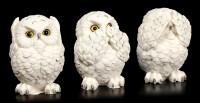 Figure - Three Wise Snowy Owls