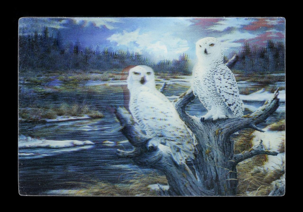 3D Postcard - Snow Owls