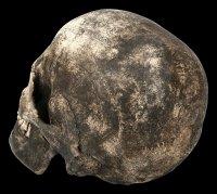 Totenkopf Replikat Frau - Sagus mit Unterkiefer - Dunkel