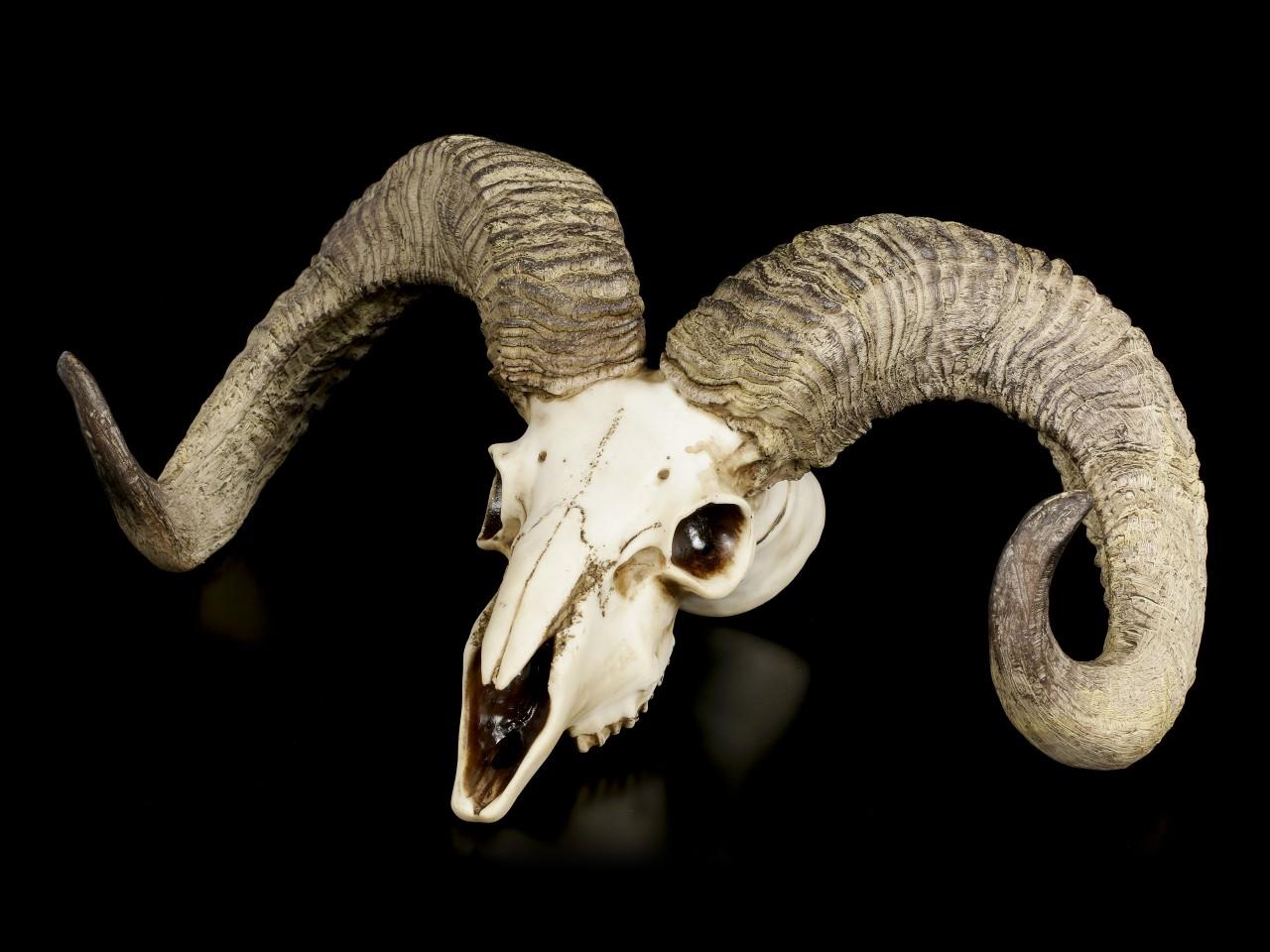 Wall Plaque Ram Skull - Diablo's Wrath