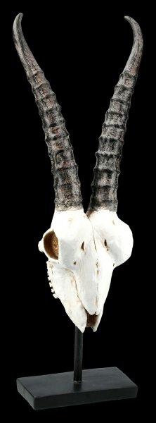 Antilopen Totenkopf auf Metall Ständer