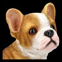 Garden Figurine - Bulldog Puppy