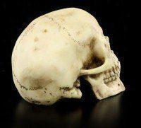 Totenkopf - Menschen Schädel