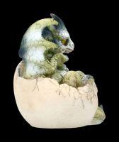 Drachen Figur - Hatchlings Emergence - Tedy