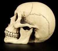 Skull Money Bank - Large