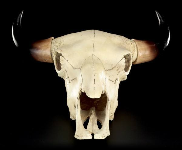 Totenkopf - Rinder Schädel Western