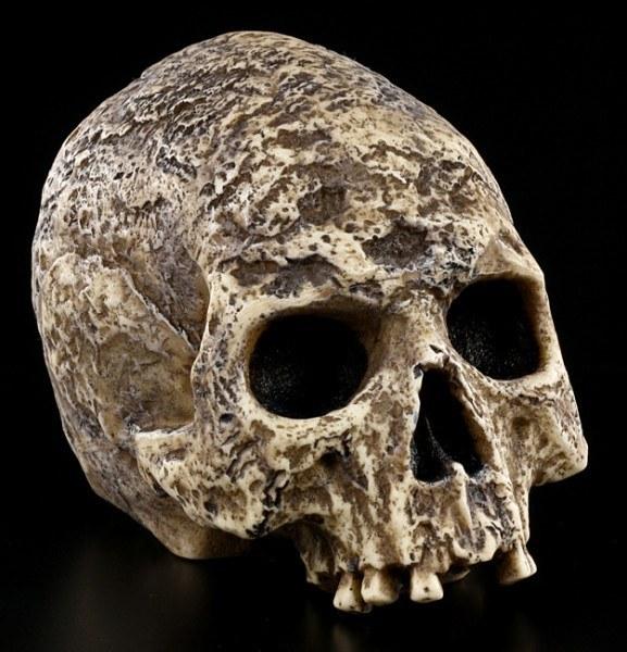 Totenkopf - Grabschädel verwest