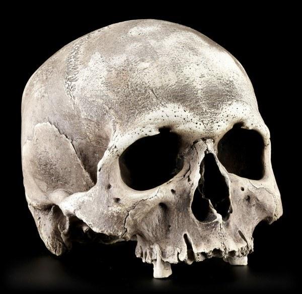 Totenkopf Replikat - Nahira Menschen Schädel - Dunkel