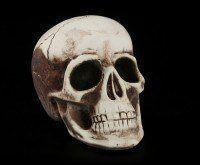 Totenkopf klein - menschlich