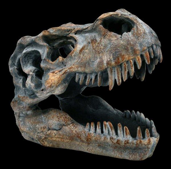 Totenkopf - Tyrannosaurus Rex - klein