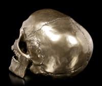 Totenkopf mit beweglichem Kiefer - Cranius