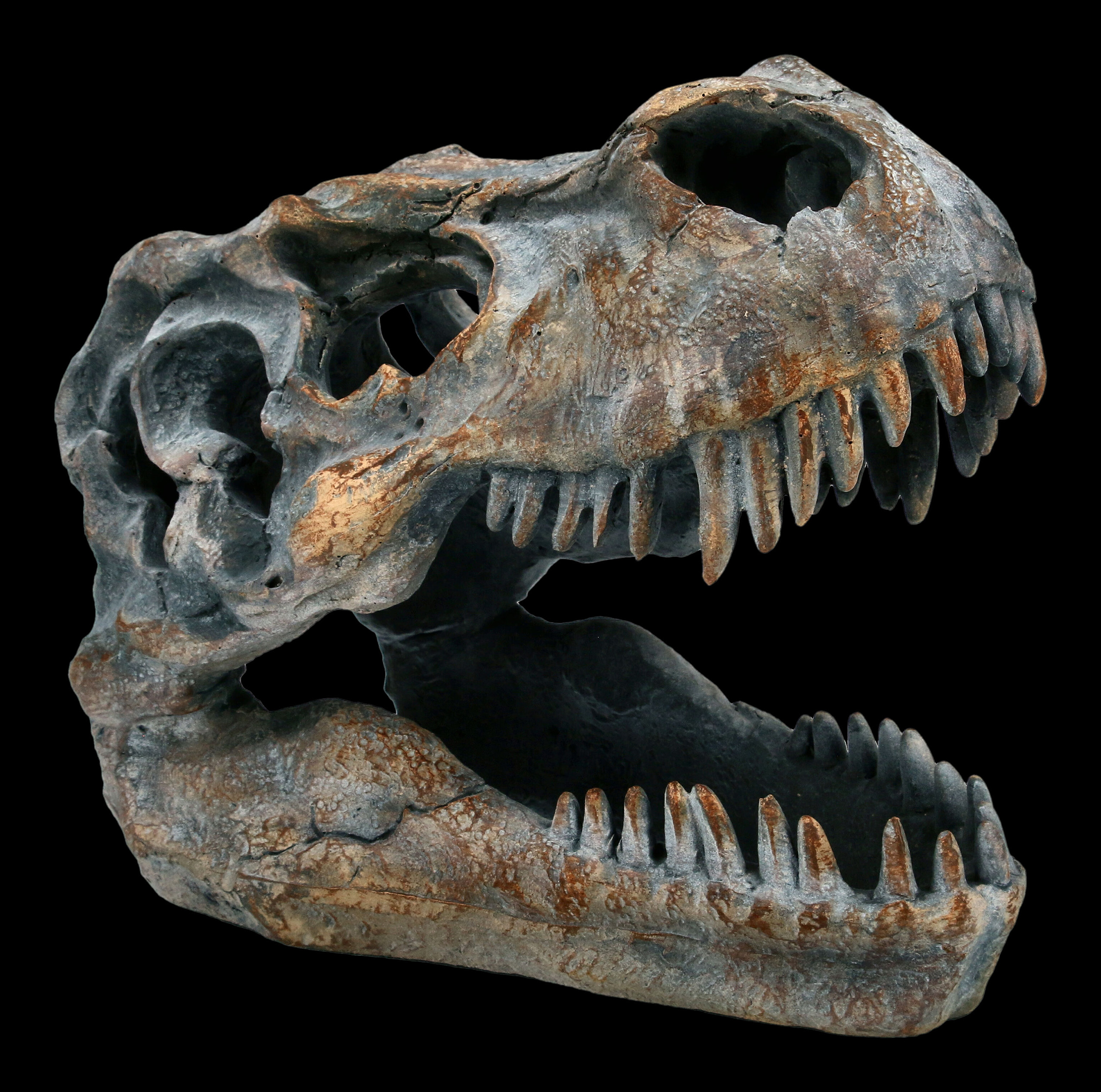 Controse T-Rex Dinosaurier Totenkopf Glänzend Edelstahl Anhänger Kette Groß Mini