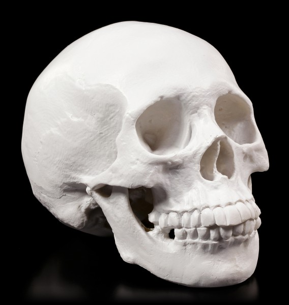 Totenkopf weiß - Yorick