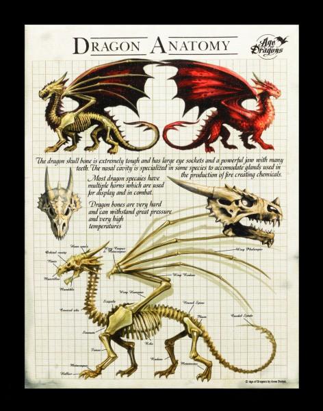 Kleine Leinwand  Drachen Anatomie - Dragon Anatomy
