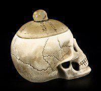 Schatulle - Totenkopf mit Schädeldecke - groß