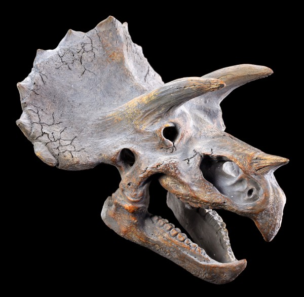 Wall Plaque - Dinosaur Head - Triceratops