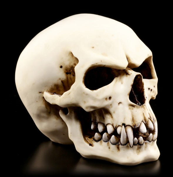 Orc Skull - Collectible