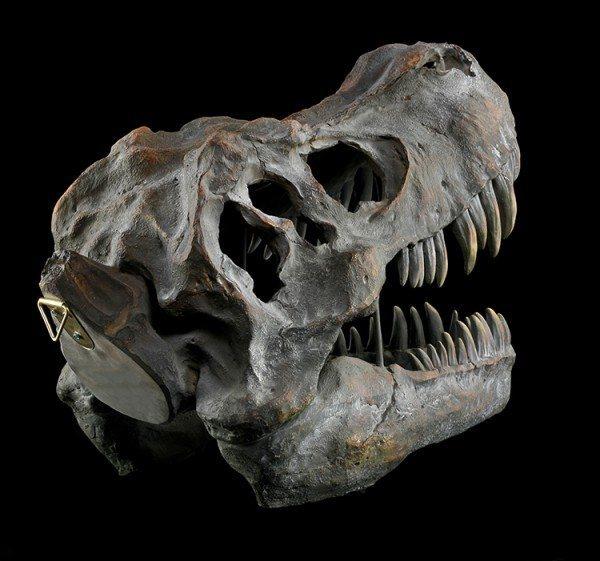 Totenkopf - Tyrannosaurus Rex - groß
