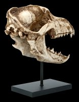 Dire Wolf Skull on Metal Stand