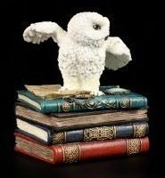 Magische Schatulle - Eule auf Büchern