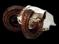 Alchemy Ram Skull - small