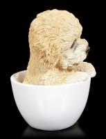 Hund in Tasse - Pudel Welpe