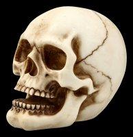 Menschlicher Totenkopf mit Unterkiefer - mittel