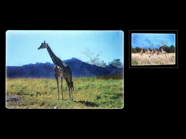 3D Postkarte - Giraffen
