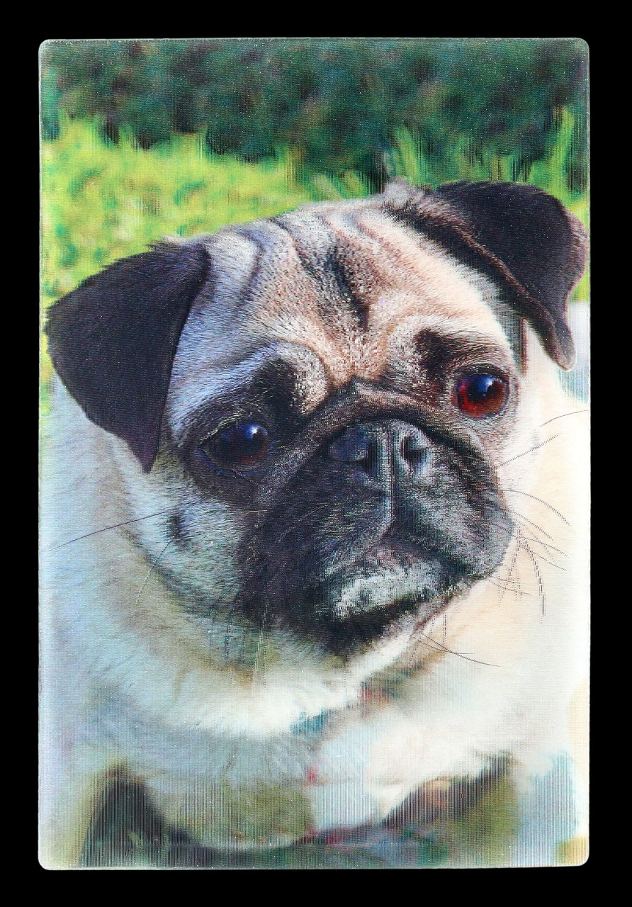 3D Postcard with Dog - Pug Puppy