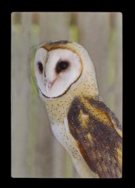 3D Postcard - Barn Owl