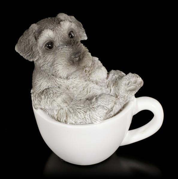 Dog in Cup mini - Schnauzer Puppy