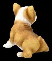 Gartenfigur - Bulldogge Welpe