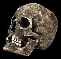 Male Skull Replica - Ragna with Mandible - Dark