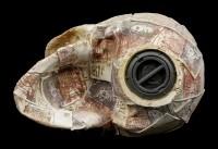 Money Bank Skull - Quids