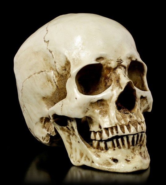Skull Head with Jaw