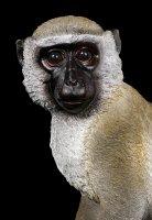 Gartenfigur Affe - Grünmeerkatze