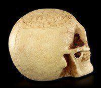 Skull - Crane Astrology