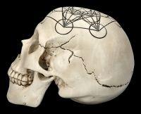 Skull - Sacred Geometry - Metatron's Cube